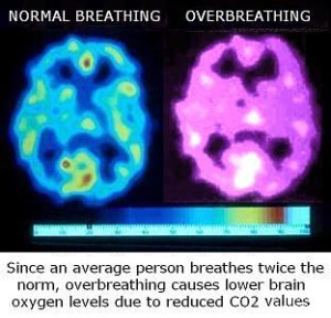 Brain oxygen levels for normal breathing and hyperventilation