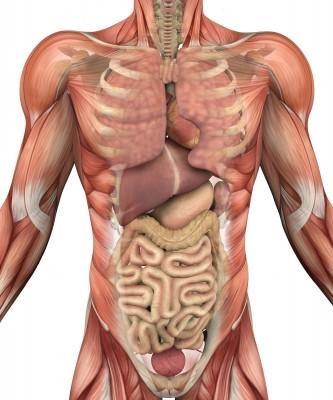 physical health organs